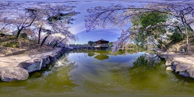 奈良公園 鷺池 浮見堂 桜 360度パノラマ写真