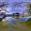 Photos: 奈良公園 鷺池 浮見堂 桜 360度パノラマ写真