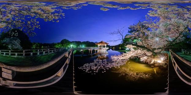 奈良公園 鷺池 浮見堂 桜 ライトアップ 360度パノラマ写真