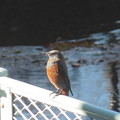 写真: 川辺の鳥