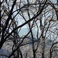 写真: 蓼科山と雨氷