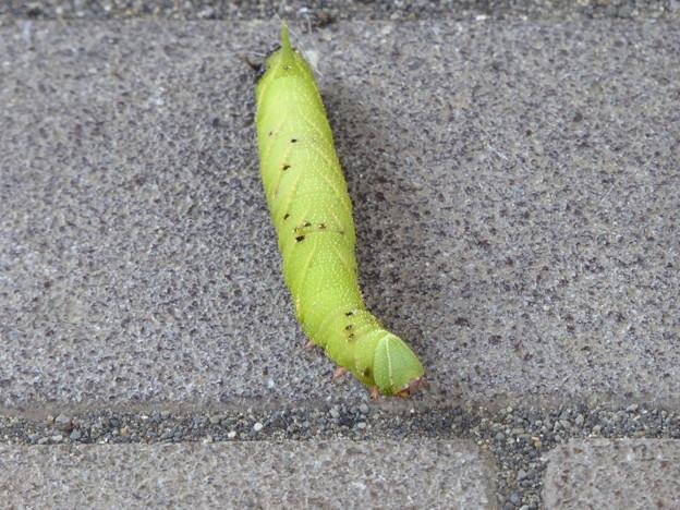 Photos: 幼虫を救助