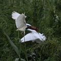 野鳥に魅せられて^^