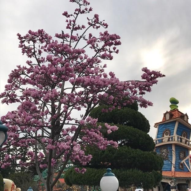 何の木だろうか。桃色。