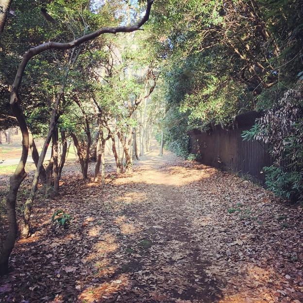 160115 代々木公園