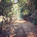 写真: 160115 代々木公園