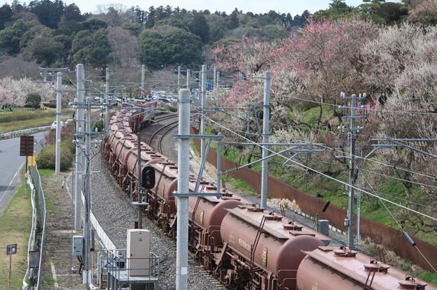 偕楽園駅を通過する5094レ安中貨物 後追い