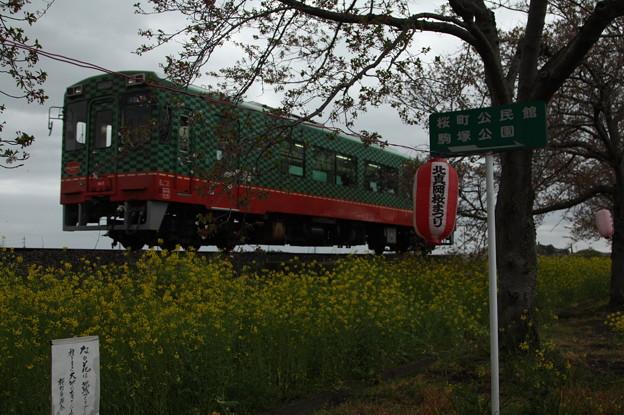北真岡の桜・菜の花の横を通過するモオカ14形