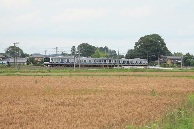 麦畑を行くE531系 (3)