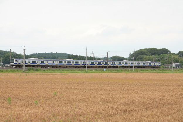 麦畑を行くE531系 (5)