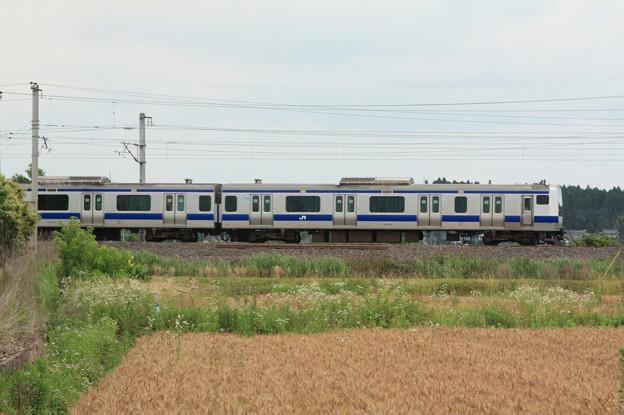 麦畑を行くE531系 (8)