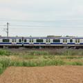 写真: 麦畑を行くE531系 (8)