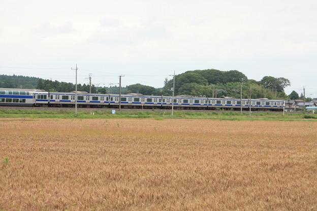 写真: 麦畑を行くE531系 (9)