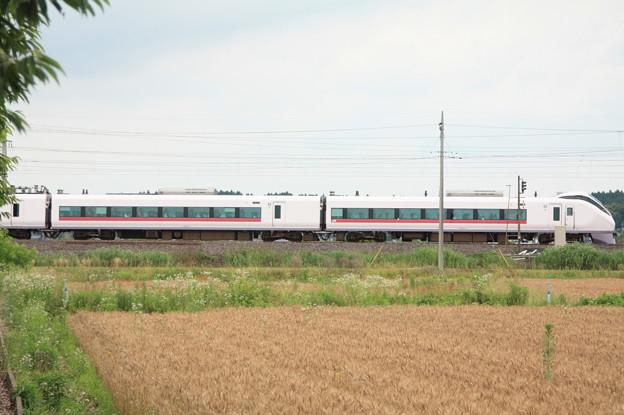 麦畑を行くE657系 (12)