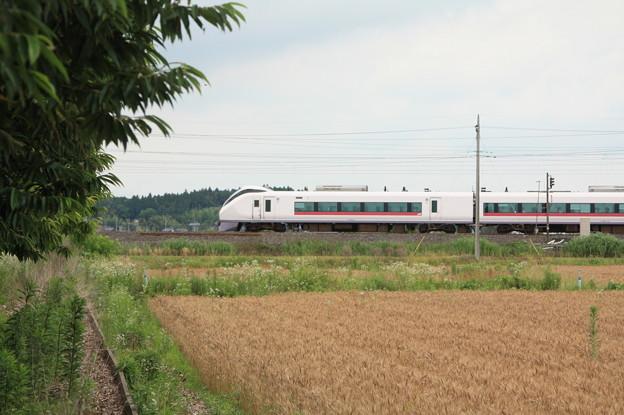 麦畑を行くE657系 (13)
