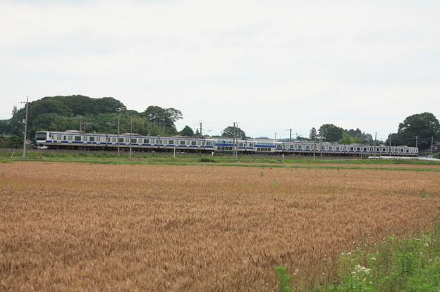 麦畑を行くE531系 (15)