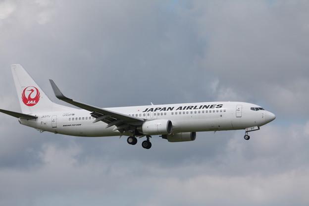 日本航空 JAL B737-800 JA317J
