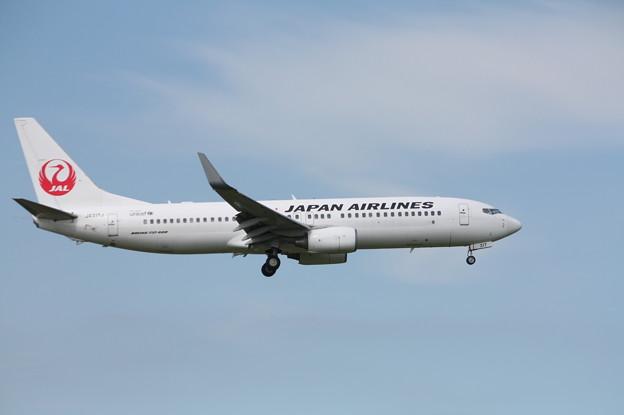 日本航空 JAL B737-800 JA317J (1)