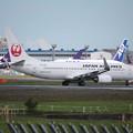 日本航空 JAL B737-800 JA304J (1)