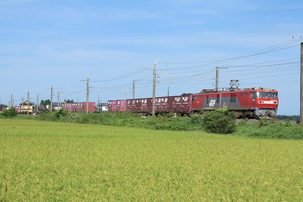 黄金の稲を行くEH500-33牽引2094レコンテナ貨物列車 (7)