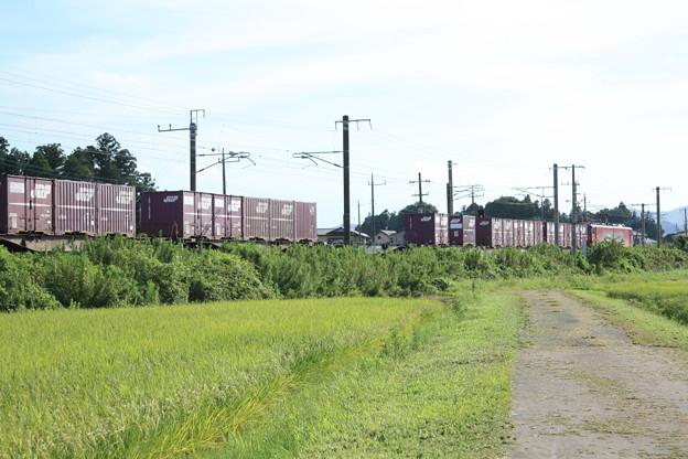 黄金の稲を行く2094レコンテナ貨物列車