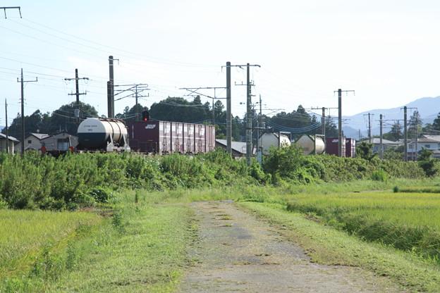 黄金の稲を行く2094レコンテナ貨物列車 (2)