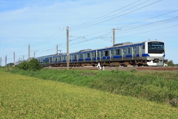 黄金の稲を行く常磐線E531系 (11)