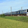 黄金の稲を行く常磐線E531系 (12)