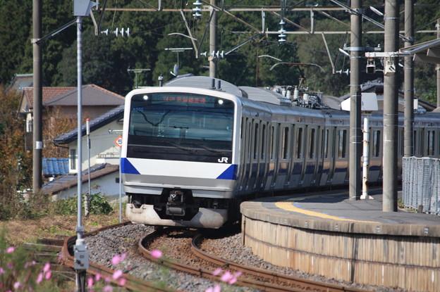 コスモスとE531系3000番台K555編成 (1)