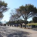 Photos: 葛西臨海公園 20181021_16