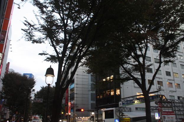 渋谷散策 20181111_21