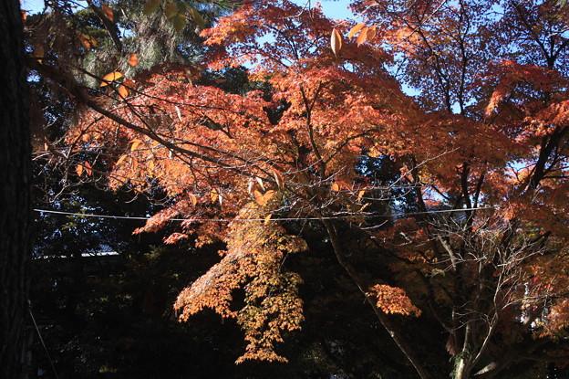 奈良の紅葉 20181124_46