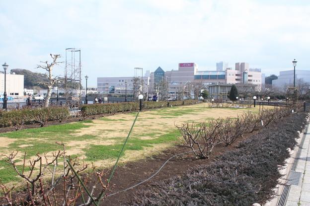 横須賀ヴェルニー公園 散策 20190302_83