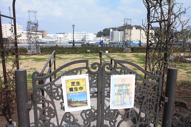 横須賀ヴェルニー公園 散策 20190302_84