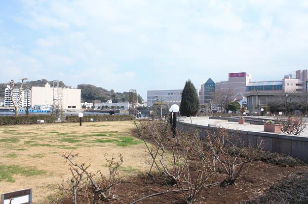 横須賀ヴェルニー公園 散策 20190302_85
