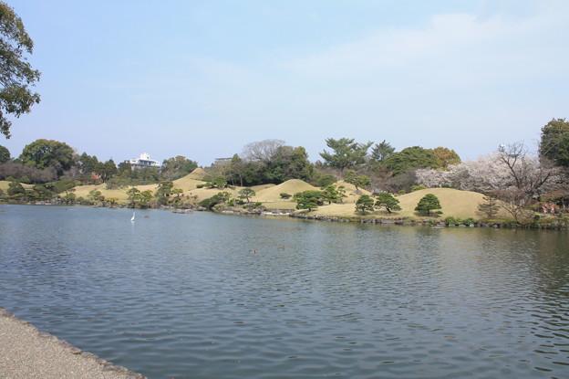 水前寺公園 20190322_49