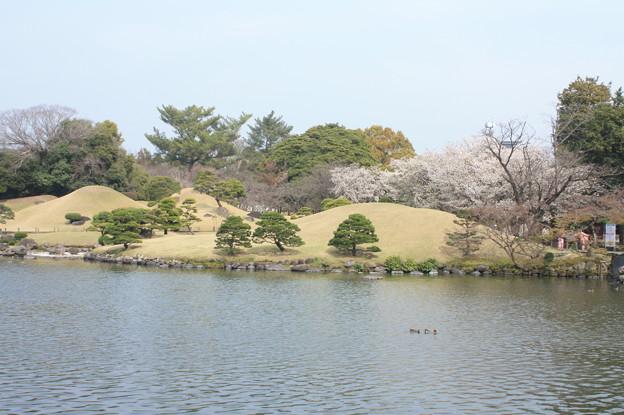 水前寺公園 20190322_50