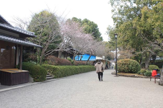 水前寺公園 20190322_53