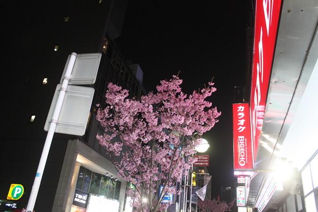 福岡 20190323_73