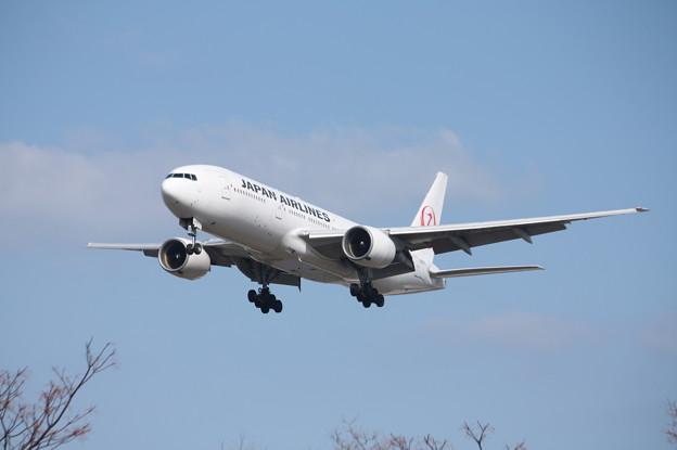 日本航空 JAL B777-200 JA8979 (1)
