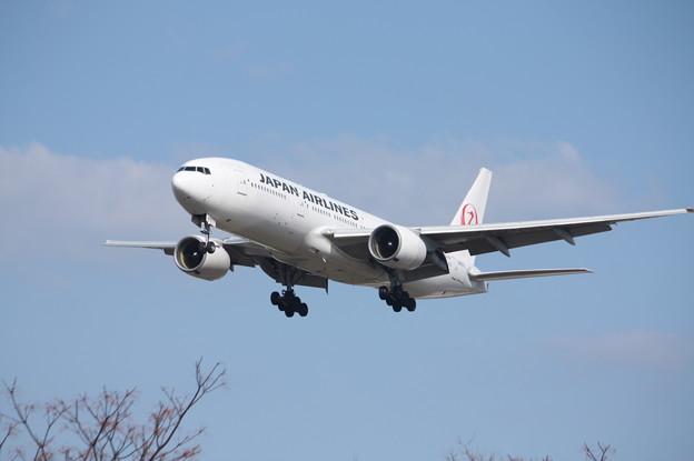 日本航空 JAL B777-200 JA8979 (2)