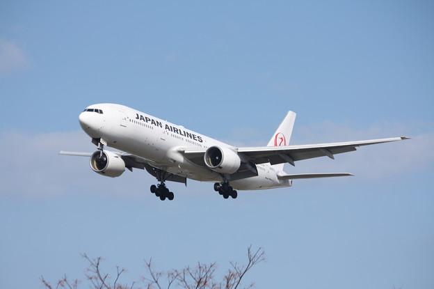 日本航空 JAL B777-200 JA8979 (3)