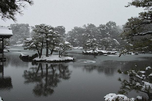 12.雪化粧した鏡湖池の木々たち