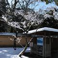 14.境内のとある木と青空