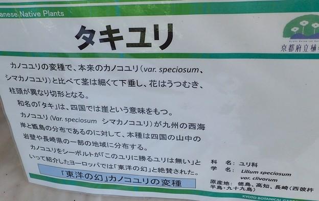タキユリ説明