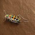 写真: 昆虫界の宝石!