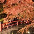 Photos: 河鹿橋ライトアップ