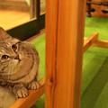 Photos: 射的屋看板猫?