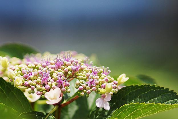 咲きはめる・・( ^ω^)・・・