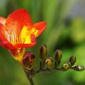 Photos: 春の香り( ^ω^)・・・